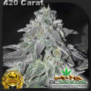 420 carat feminized cannabis seeds
