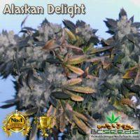 Alaskan Delight