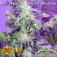 All New White Widow Bud