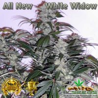 All New White Widow Seeds