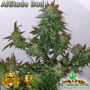Altitude Bud