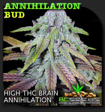 Annihilation Bud