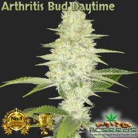 Arthritis Bud Daytime
