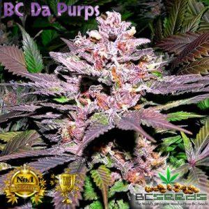 BC Da Purps