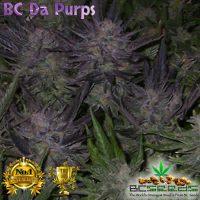 BC Da Purps Grow