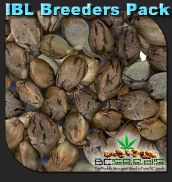 BC Seeds IBL Breeders Pack