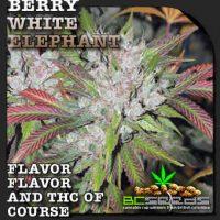 berry white elephant seeds