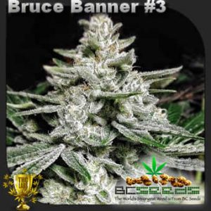 Bruce Banner No 3