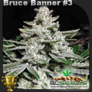 Bruce Banner No 3