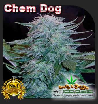 Chem Dog