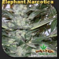 Elephant Narcotica