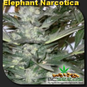 Elephant Narcotica