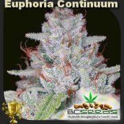 Euphoria Continuum Bud