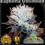 Euphoria Unlimited