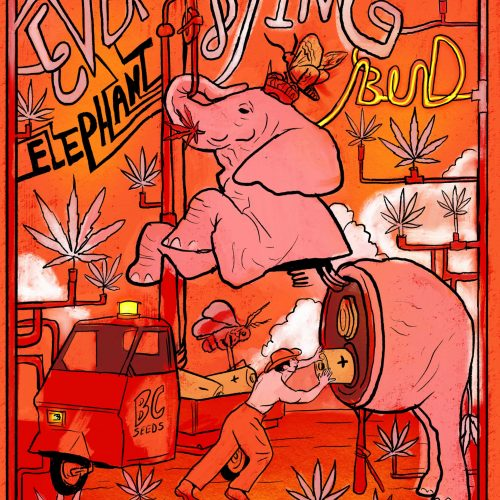 Everlasting Elephant Bud Strain