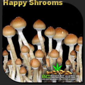 Happy Shrooms