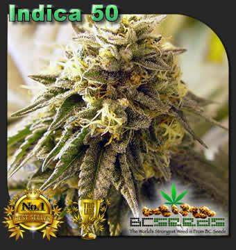 Indica 50