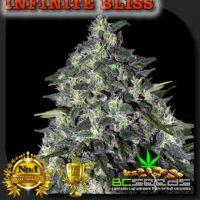 Infinite Bliss