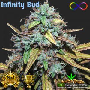 Infinity Bud