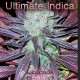 Legends Ultimate Indica