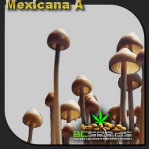 Mexicana A Shrooms