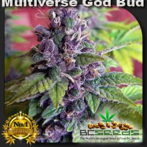 Multiverse God Bud