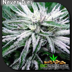 Never Dies Cannabis Plant