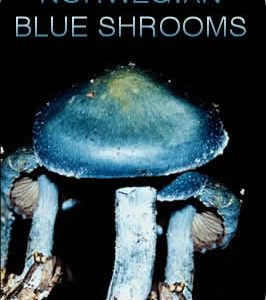 Norwegian Giant Blue Shrooms