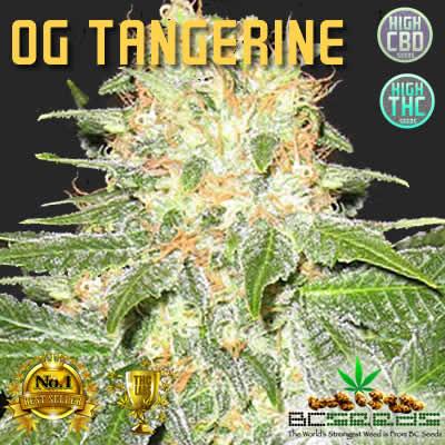 OG Tangerine Bud