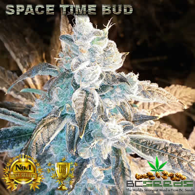 Space Time Bud Flowering