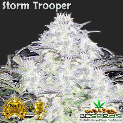 Storm Trooper Bud