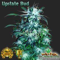 Upstate Bud