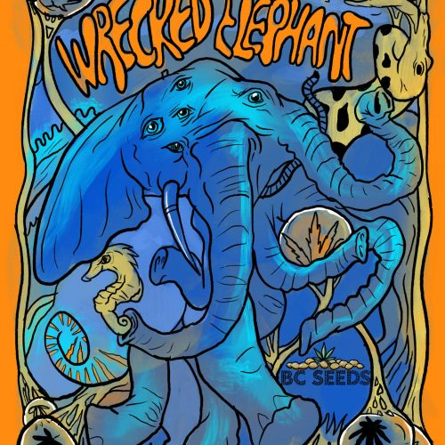 Wrecked Elephant Bud 1