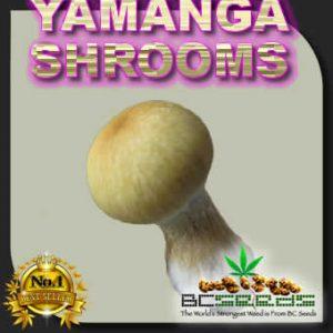 Yamanga Shrooms