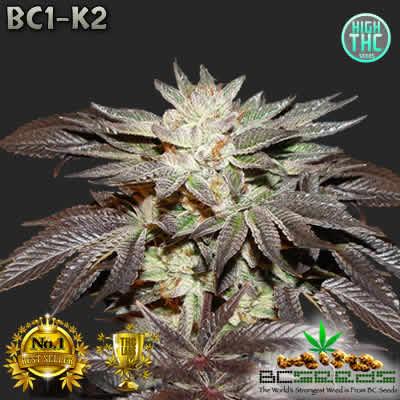 BC1-K2