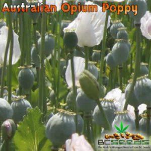 Australian Opium Poppy Seeds
