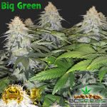 BC Big Green