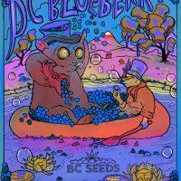 BC Blueberry Cannabis