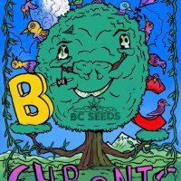 BC Chronic Classic