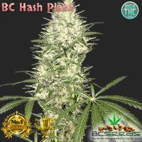 BC Hash Plant