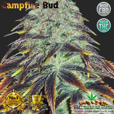 Campfire Bud