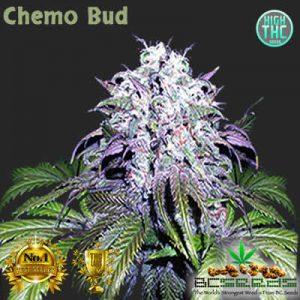 Chemo Bud