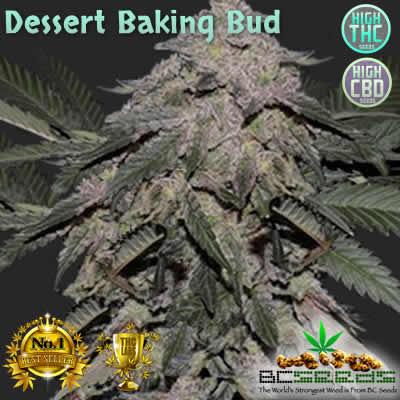 Dessert Baking Bud