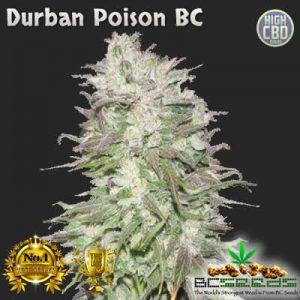 Durban Poison BC