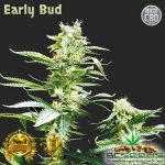 Early Bud