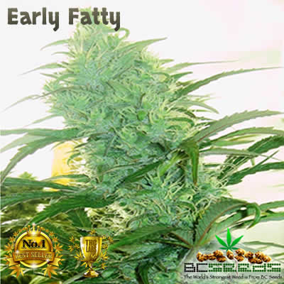 Early Fatty Cannabis Strain