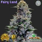 Fairy Land Bud