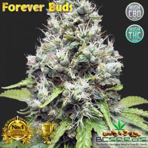 Forever Buds