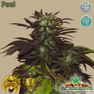 Fuel Bud