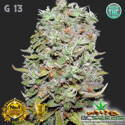 G13 Bud